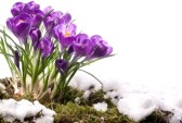 12464398-art-beautiful-spring-flowers[1] By 123rf.com