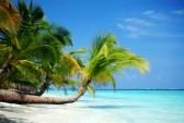 10895922-tropical-island-palm-sea-and-sky[1] By 123rf.com
